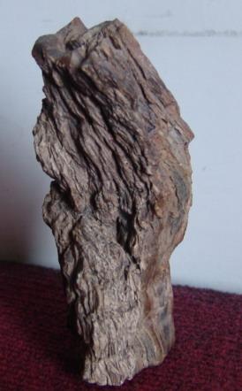 新疆木化石